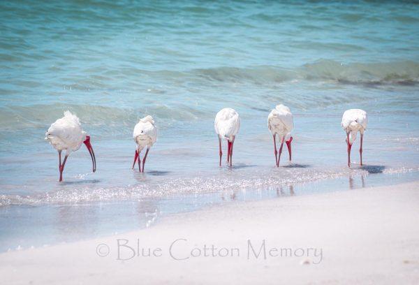 This image has an empty alt attribute; its file name is beachbirdsblogc-600x408.jpg